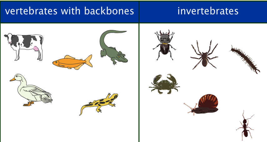 Living in Our Amazing World : The Differences Between Vertebrae ...